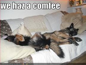 we haz a comfee