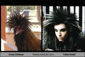 Crazy Chicken Totally Looks Like Tokio Hotel