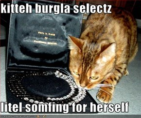kitteh burgla selectz  litel somfing for herself