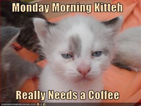 Monday Morning Kitteh  Really Needs a Coffee
