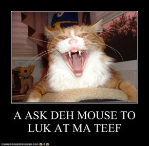 A ASK DEH MOUSE TO LUK AT MA TEEF