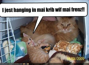 I jest hanging in mai krib wif mai frenz!!