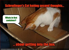 Schrodinger's Cat having second thoughts...