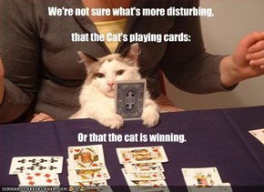 We're not sure what's more disturbing,  that the Cat's playing cards: