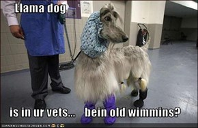 Llama dog  is in ur vets...    bein old wimmins?