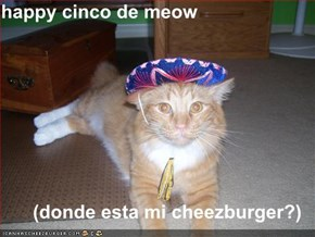 happy cinco de meow  (donde esta mi cheezburger?)