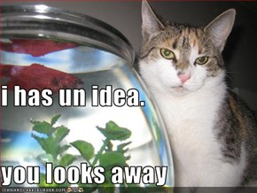 i has un idea.  you looks away