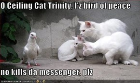 O Ceiling Cat Trinity, I'z bird of peace  no kills da messenger, plz