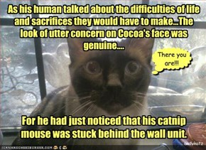 As his human talked about the difficulties of life  and sacrifices they would have to make...The look of utter concern on Cocoa's face was genuine....