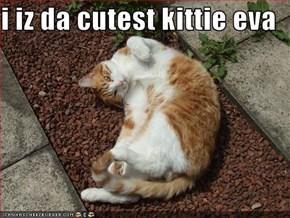 i iz da cutest kittie eva