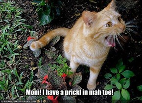 Mom! I have a prickl in mah toe!