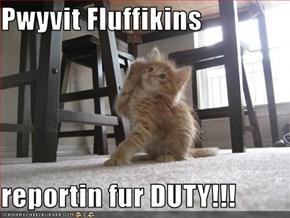 Pwyvit Fluffikins  reportin fur DUTY!!!