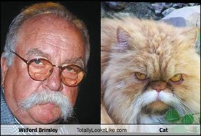 Wilford Brimley Totally Looks Like Cat