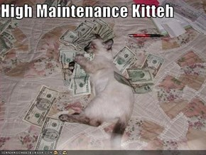 High Maintenance Kitteh