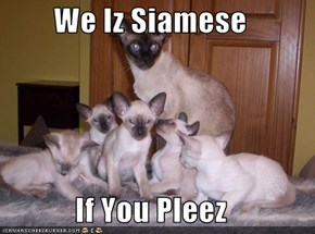 We Iz Siamese  If You Pleez