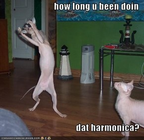 how long u been doin  dat harmonica?