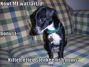 Nowt ME wat fartzd! honust... Kitteh etted stenkee fish noms