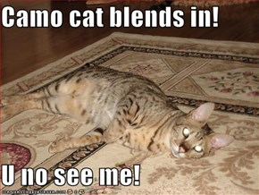 Camo cat blends in!  U no see me!