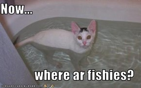Now...   where ar fishies?