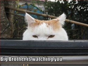 Big Brother is watching you...