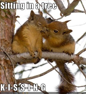 Sitting in a tree  K-I-S-S-I-N-G
