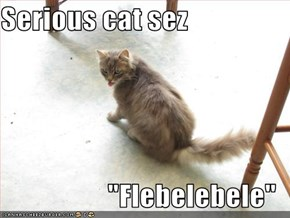 "Serious cat sez  ""Flebelebele"""