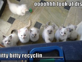 oooohhh look at dis........   itty bitty recyclin..................