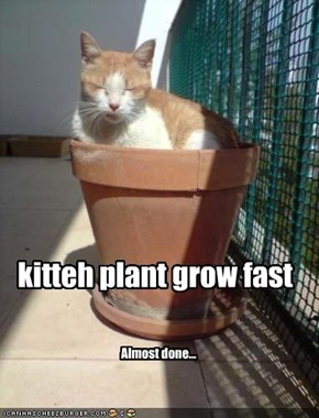 kitteh plant grow fast