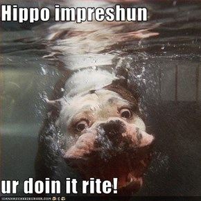Hippo impreshun  ur doin it rite!