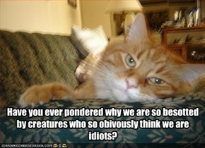 Have you ever pondered why we are so besotted by creatures who so obivously think we are idiots?