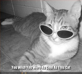 You Wish You Were As Cool As This Cat