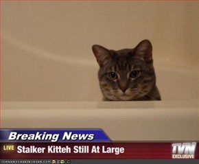 Breaking News - Stalker Kitteh Still At Large