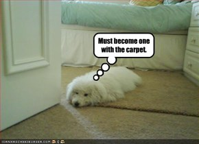 Must become one with the carpet.