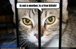 Is not a number, Is a free kitteh!