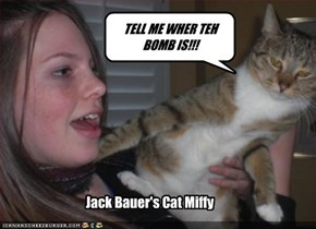Jack Bauer's Cat Miffy