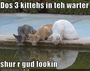 Dos 3 kittehs in teh warter  shur r gud lookin