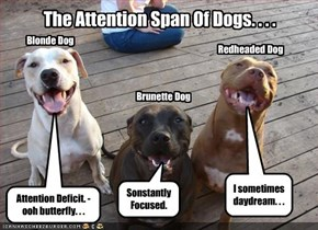 The Attention Span Of Dogs. . . .