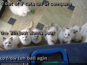 6 out of 7 cats luv ur company the 7th just wants you to frow teh ball agin