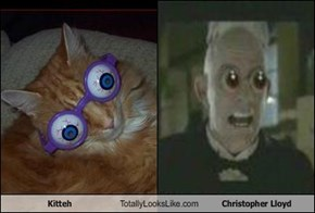 Kitteh Totally Looks Like Christopher Lloyd