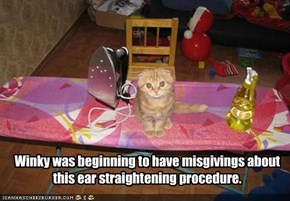 Winky was beginning to have misgivings about this ear straightening procedure.