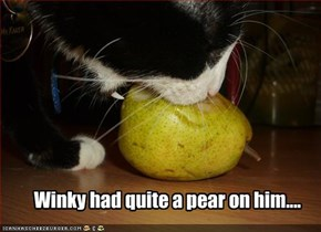 Winky had quite a pear on him....