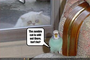 The zombie cat is still out there, isn't he?
