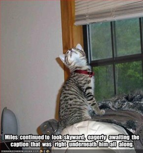 Miles  continued to  look  skyward,   eagerly   awaiting  the  caption  that  was   right   underneath  him  all   along.