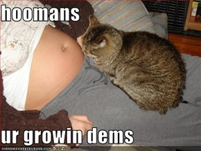 hoomans  ur growin dems