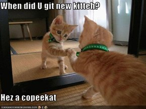 When did U git new kitteh?  Hez a copeekat