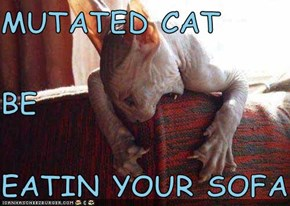 MUTATED CAT BE EATIN YOUR SOFA