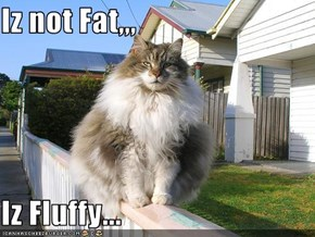 Iz not Fat,,,  Iz Fluffy...