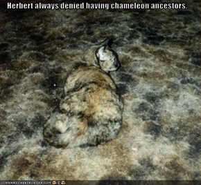 Herbert always denied having chameleon ancestors.