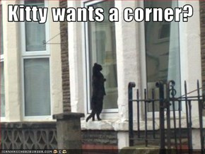 Kitty wants a corner?