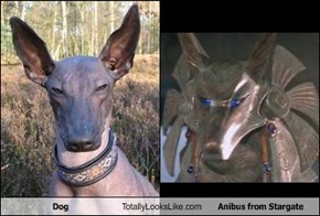 Dog Totally Looks Like Anibus from Stargate